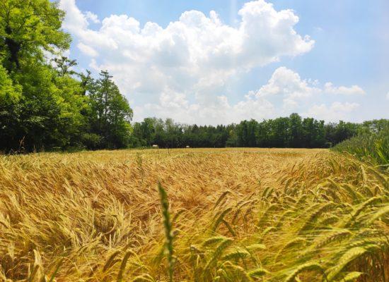 birrificio agricolo